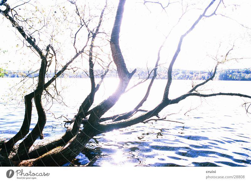branches at the lake Lake Pond Tree Branchage Sunbeam Water Coast