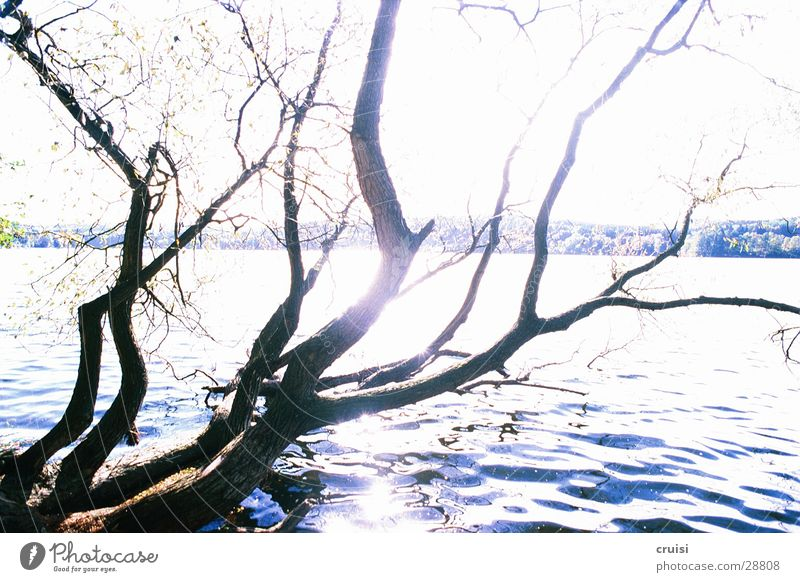 Water Tree Sun Lake Coast Branch Pond Branchage