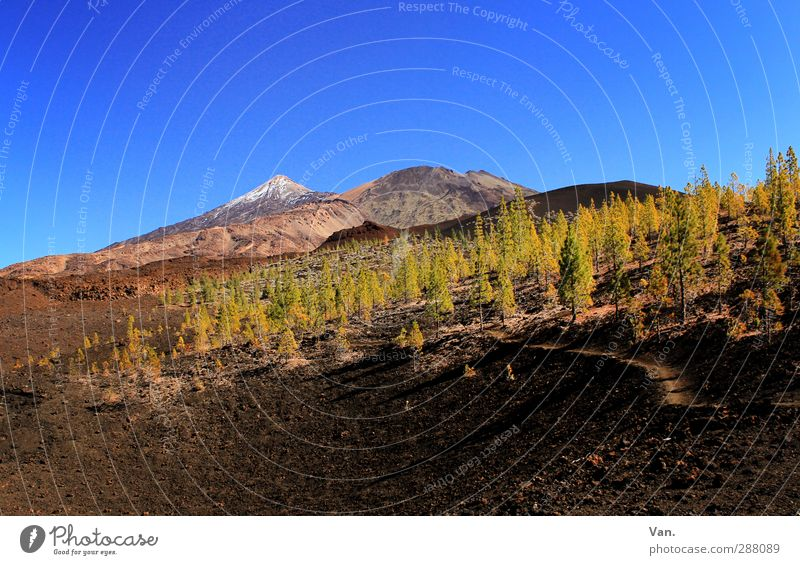 Teide I Vacation & Travel Hiking Nature Landscape Earth Sky Cloudless sky Beautiful weather Tree Forest Rock Mountain Snowcapped peak Volcano Lanes & trails