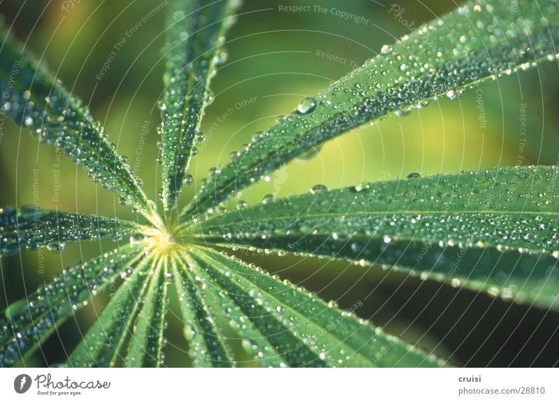 Nature Green Plant Leaf Rain Drops of water Pteridopsida