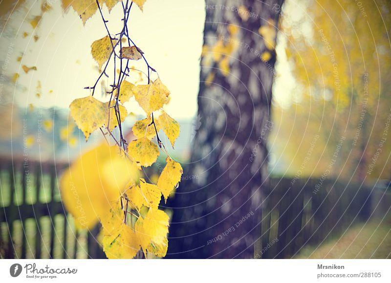 Nature Plant Tree Leaf Calm Environment Autumn Wood Garden Rain Fog Individual Branch Twig Autumnal Autumnal colours