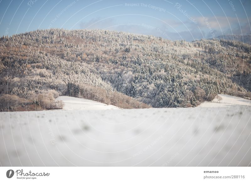 Sky Nature Vacation & Travel Blue Plant White Tree Landscape Winter Forest Cold Mountain Snow Bright Weather Fresh