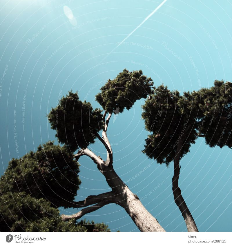 Puschel trees in the autumn wind Nature Sky Autumn Beautiful weather Tree Joie de vivre (Vitality) Enthusiasm Euphoria Power Brave Passion Movement Emotions