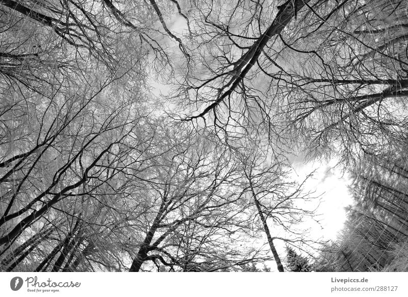 Branch against branch Environment Nature Plant Water Sky Winter Snow Tree Wild plant Forest Fresh Cold Gray Black White Black & white photo Exterior shot Day