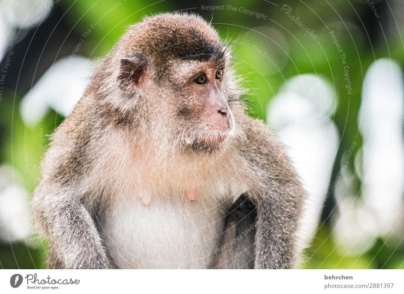 where is the weekend? Vacation & Travel Tourism Trip Adventure Far-off places Freedom Virgin forest Wild animal Animal face Pelt Monkeys longtail macaque