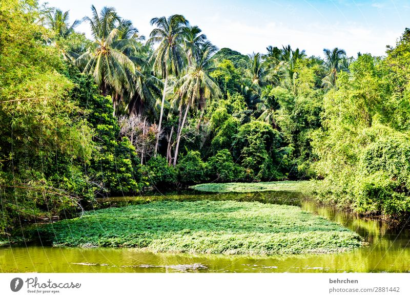 naturalness Vacation & Travel Tourism Trip Adventure Far-off places Freedom Nature Landscape Tree Bushes Leaf Palm tree Virgin forest River bank Exceptional