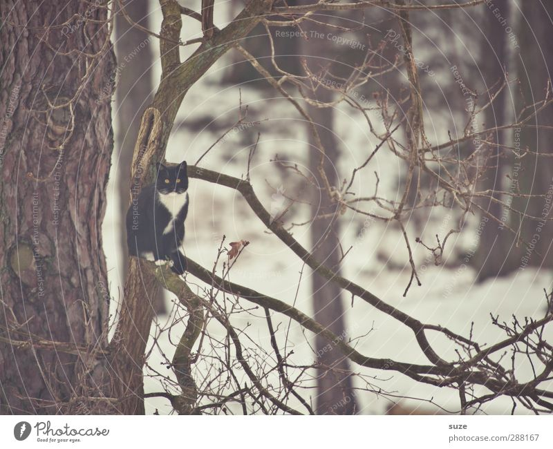 I'm like a bird Environment Nature Winter Tree Animal Pet Cat 1 Sit Exceptional Cold Funny Gloomy Brown Animalistic Branch Twigs and branches Treetop