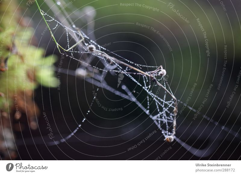 Indian summer Nature Flying Glittering Hang Thin Natural Soft Movement Network Transience Spider's web Indian Summer Autumn Dew String Stop Judder Moistened