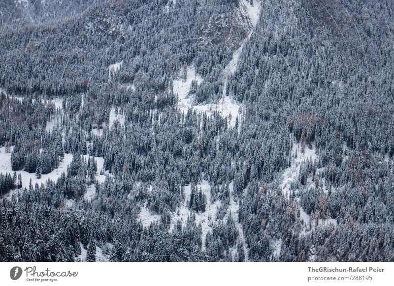 Nature Blue White Tree Landscape Black Forest Environment Mountain Snow Snowfall Brown Gloomy Alps Snowscape Untouched
