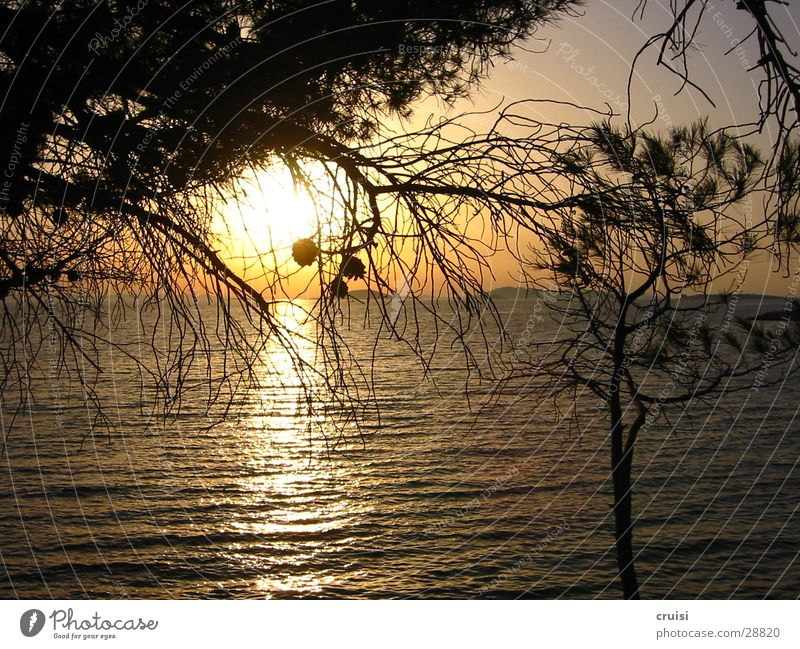 Water Sun Ocean Horizon Stone pine