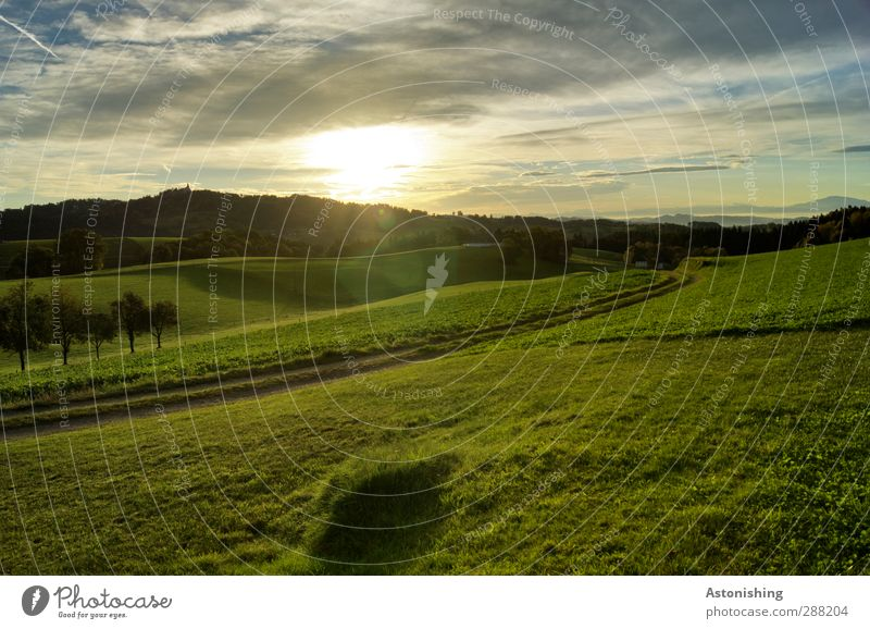In the morning Environment Nature Landscape Plant Sky Clouds Sun Sunrise Sunset Sunlight Summer Weather Beautiful weather Tree Grass Moss Meadow Field Forest