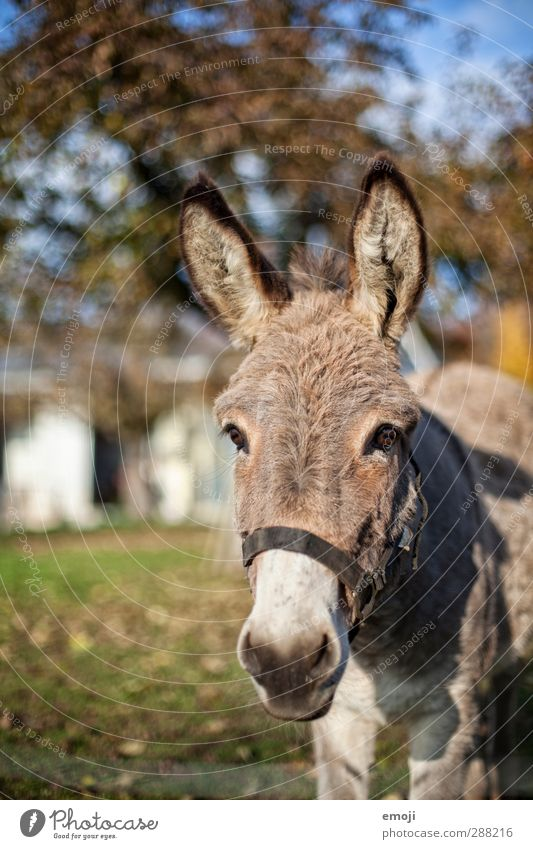 Animal Natural Cute Curiosity Farm Animal face Rural Farm animal Donkey