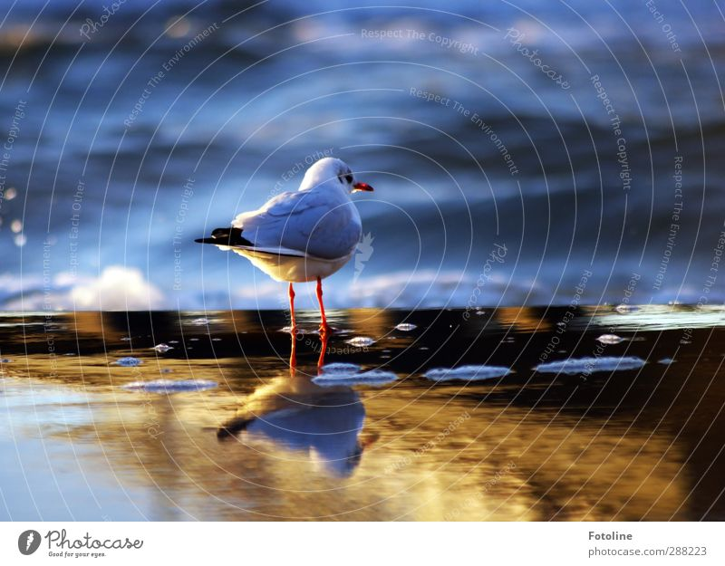 Nature Ocean Beach Animal Environment Cold Coast Bird Natural Waves Wild animal Wet Wing Near North Sea Baltic Sea