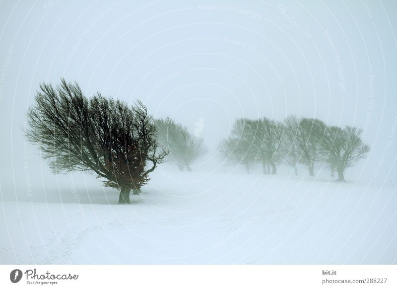 Nature Blue Plant Tree Loneliness Winter Landscape Forest Environment Dark Cold Snow Snowfall Ice Wind Climate
