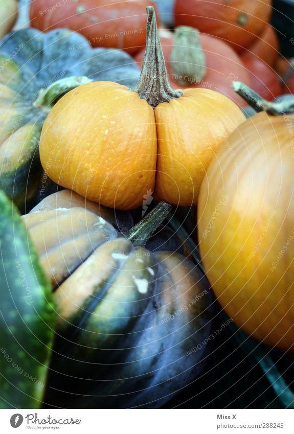 Funny Food Nutrition Bottom Vegetable Organic produce Pumpkin Vegetarian diet Farmer's market Vegetable market