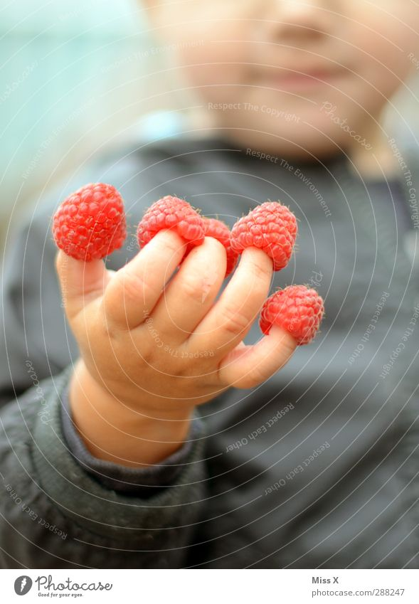 Human being Child Hand Eating Pink Infancy Fruit Food Fingers Nutrition Sweet Cute Toddler Delicious 3 - 8 years Raspberry