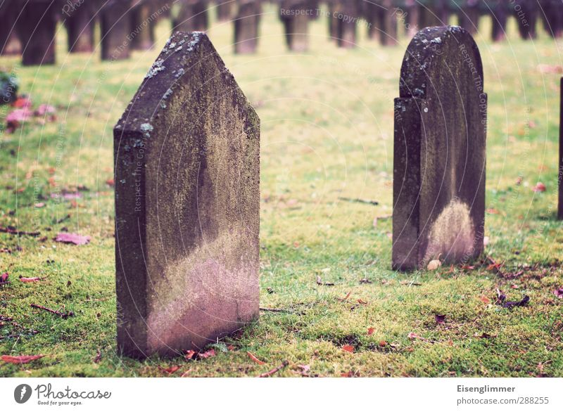 R.I.P. Autumn Meadow Cemetery Grave Tomb Tombstone Stand Old Dark Grief Death End Decline Transience Colour photo Exterior shot Deserted Copy Space middle Day