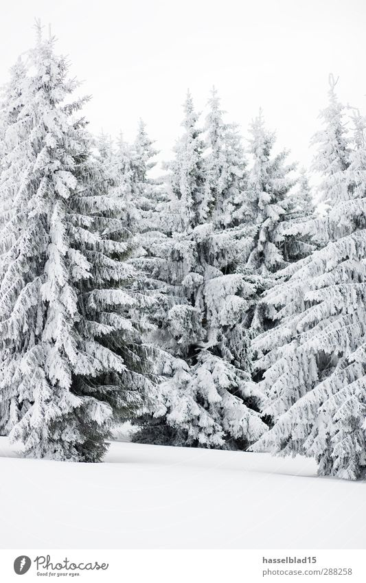 Winter in Thuringia Relaxation Calm Snow Winter vacation Mountain Environment Landscape Plant Animal Climate Snowfall Tree Forest Cold Fir tree Spruce