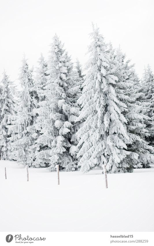 Winter in Thuringia 2 Calm Snow Winter vacation Mountain Landscape Snowfall Tree Field Forest Peak Cold Fir tree Spruce Christmas tree Fairy tale