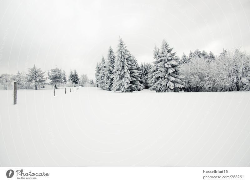 Tree Calm Landscape Winter Forest Environment Cold Mountain Snow Snowfall Ice Field Climate Frost Fir tree Fairy tale