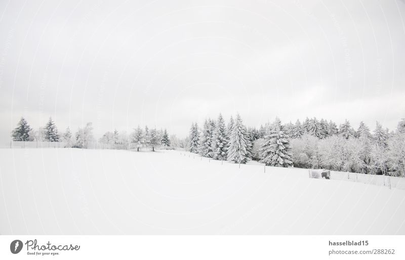 Winter in Thuringia 4 Calm Mountain Landscape Snow Snowfall Forest Cold Fir tree blue spruce Spruce Fairy tale Enchanted forest Subdued colour Exterior shot