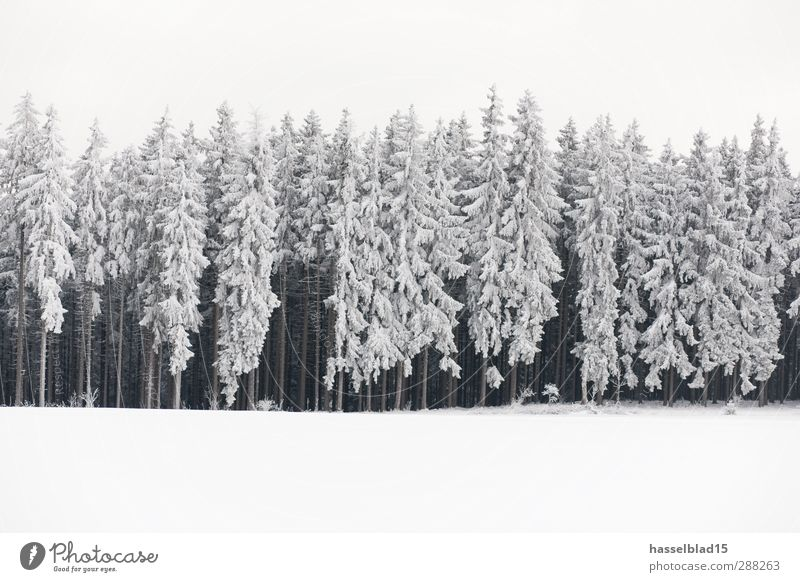 Winter in Thuringia 5 Relaxation Calm Mountain Landscape Plant Snow Snowfall Field Forest Cold Fir tree Spruce Fairy tale Enchanted forest Subdued colour