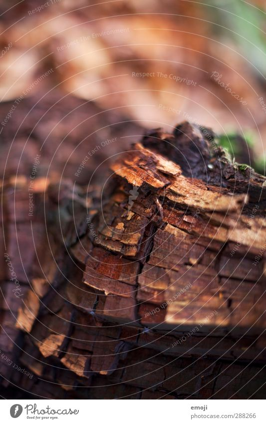 pattern Environment Nature Autumn Tree Wood Tree bark Natural Brown Colour photo Exterior shot Close-up Detail Macro (Extreme close-up) Deserted Day