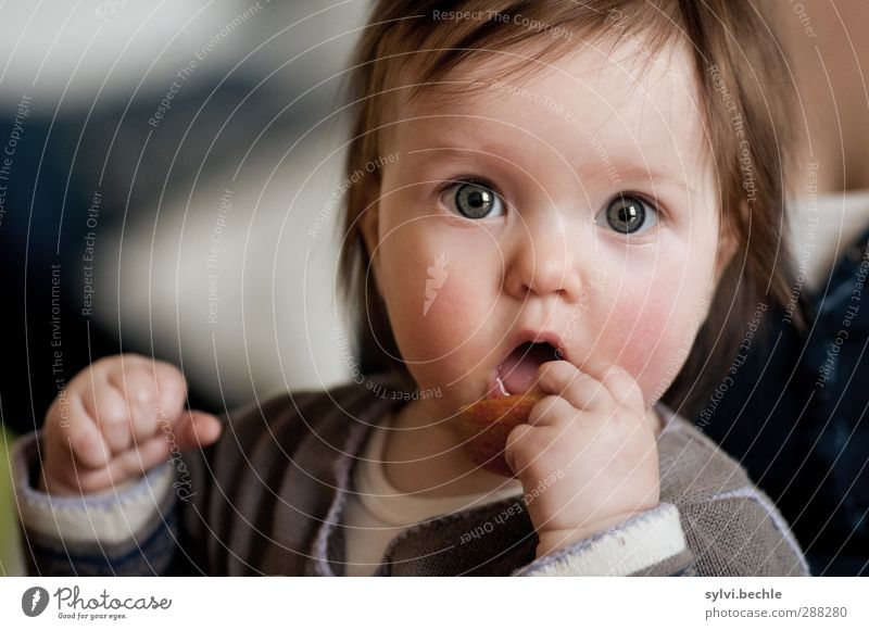 Toddler discovers the world, eating apple Food Fruit Apple Nutrition Eating Organic produce Vegetarian diet Finger food Healthy Healthy Eating