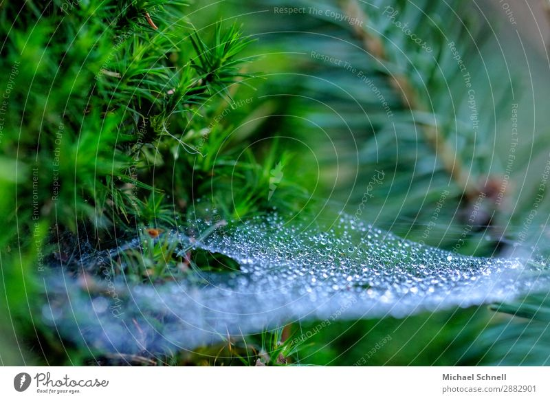 Dew drops in the spider's web Environment Nature Plant Water Drops of water Spring Authentic Glittering Sustainability Wet Natural Green Ease Calm Fragile