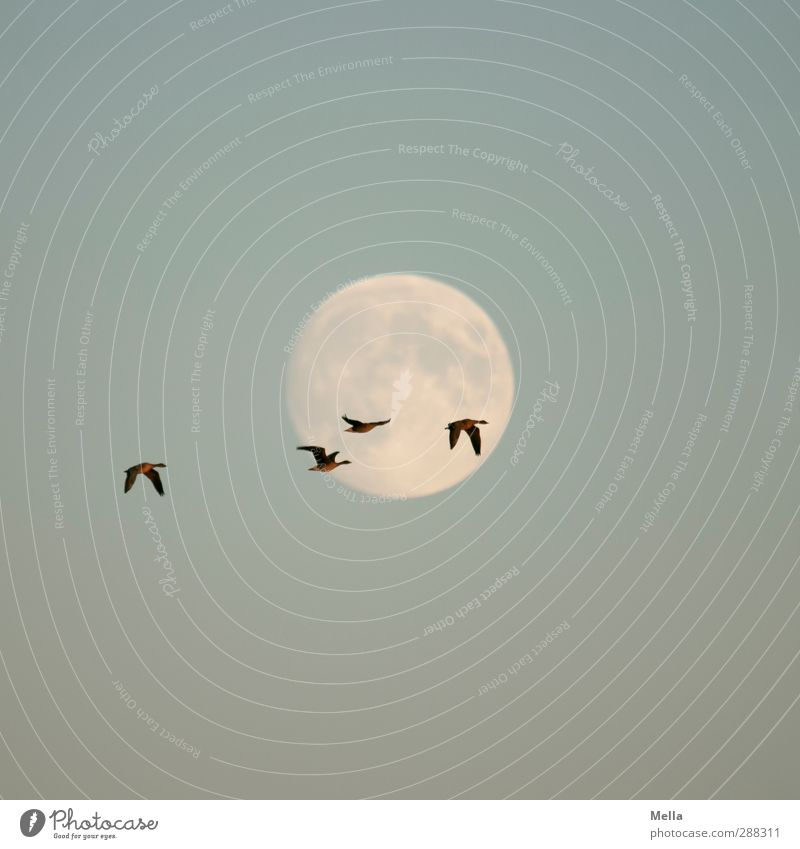 Sky Nature Blue Animal Environment Freedom Air Bird Together Natural Flying Wild animal Illuminate Perspective Group of animals