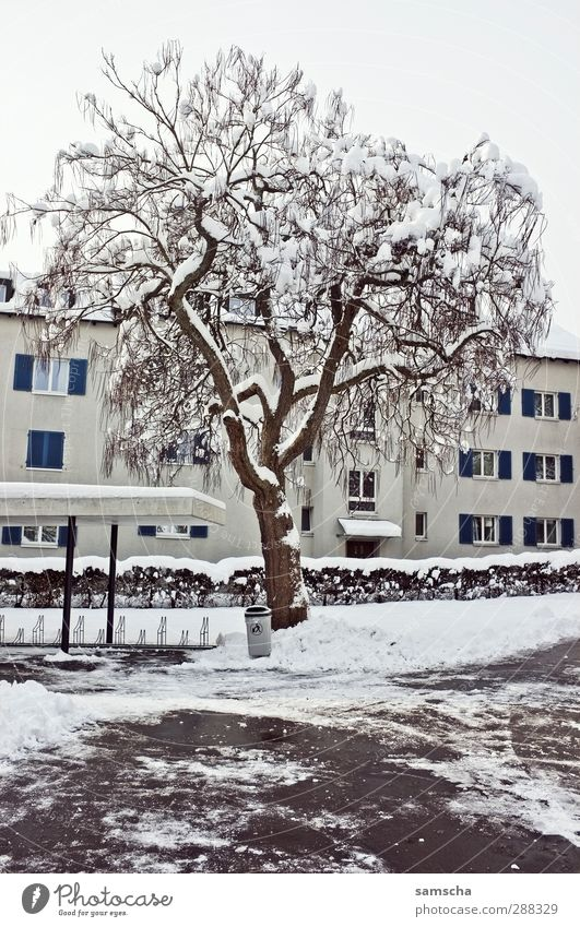 winter II House (Residential Structure) Environment Nature Plant Winter Ice Frost Snow Tree Town Building Freeze Living or residing Cold White Winter mood