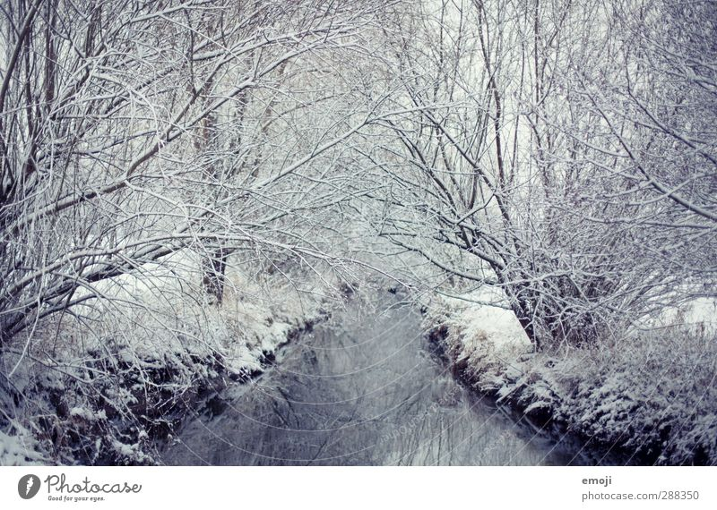 Still Environment Nature Winter Snow Tree Bushes Forest Brook River Cold Natural Blue White Calm Ice Colour photo Subdued colour Exterior shot Deserted Day