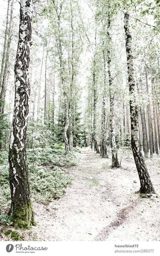 Birch forest Thuringia Well-being Contentment Relaxation Calm Meditation Vacation & Travel Tourism Trip Adventure Far-off places Freedom Sightseeing Safari
