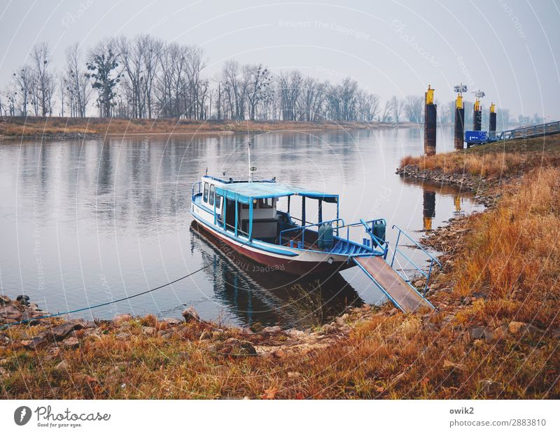 Shortly before Wittenberg Environment Nature Landscape Plant Water Sky Horizon Autumn Tree Grass Bushes River bank Elbe Saxony-Anhalt Germany Means of transport