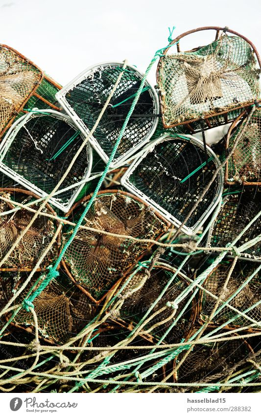 harbour edge Leisure and hobbies Fishing (Angle) Dirty Rust Fish trap fishing Fishery Harbour Eel Rope Net Green Relaxation Past Fisherman Angler Equipment