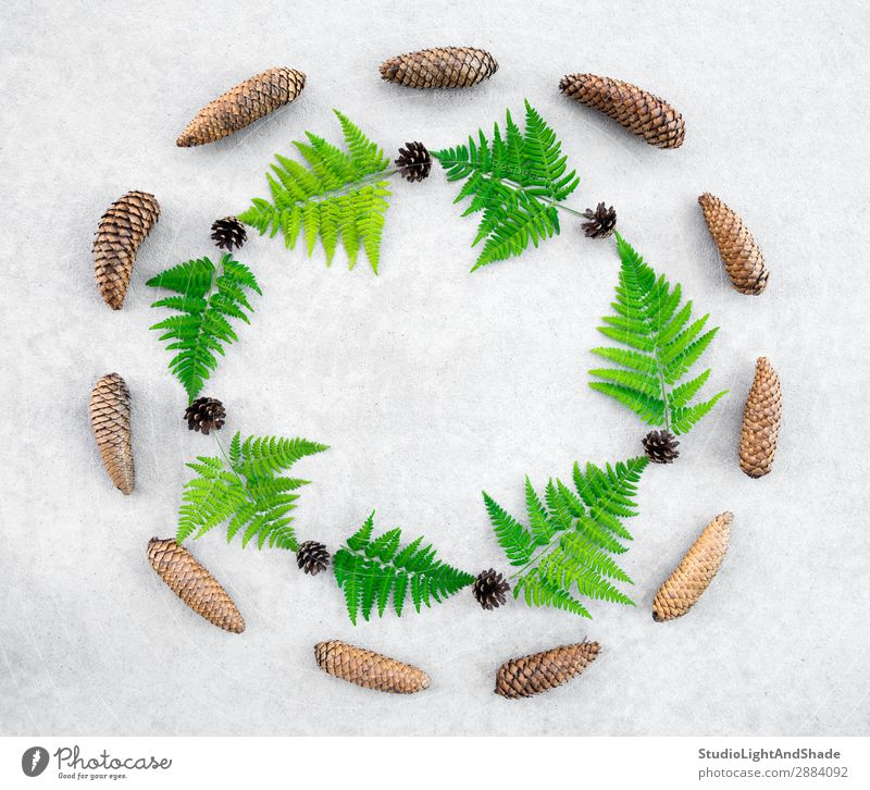 Round frame made of conifer cones and wild forest fern Design Summer Nature Plant Leaf Forest Stone Concrete Modern Natural Wild Gray Green Colour border