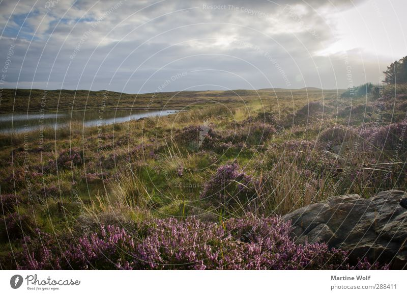 oh holde Heide Vacation & Travel Trip Far-off places Freedom Environment Nature Landscape Plant Sun Bushes Foliage plant Wild plant Heathland Pond Great Britain