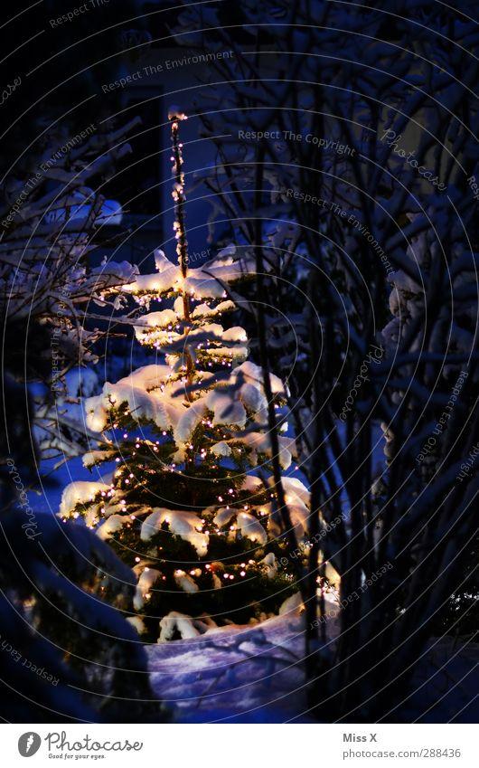 Christmas & Advent White Tree Winter Cold Snow Garden Lighting Snowfall Glittering Illuminate Decoration Christmas tree Fir tree Christmas decoration