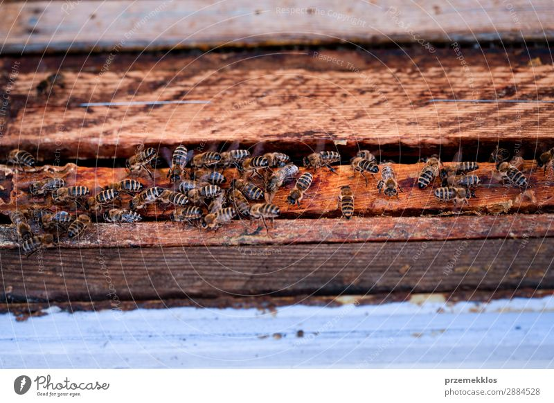 Bees sitting on hive Summer Work and employment Human being Man Adults Nature Animal Draw Natural agriculture Apiary apiculture bee yard bee-garden Bee-keeper