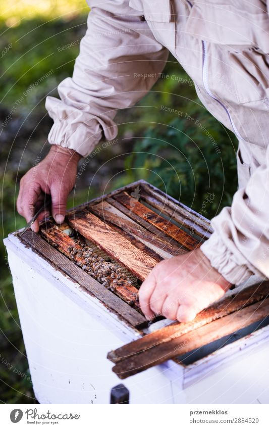 Beekeeper working in apiary Summer Work and employment Human being Man Adults Nature Animal Draw Natural agriculture Apiary apiculture bee yard bee-garden