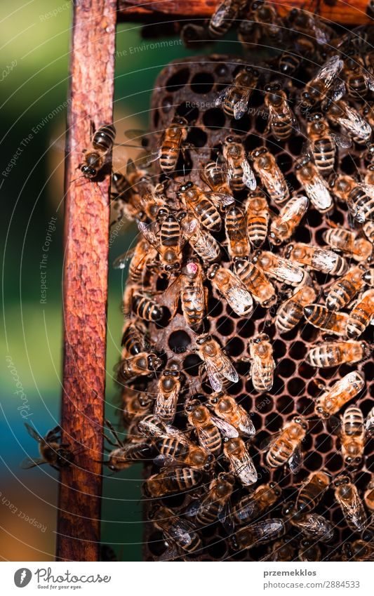 Bee hive sitting on honeycomb Summer Work and employment Human being Man Adults Nature Animal Draw Natural agriculture Apiary apiculture bee yard bee-garden