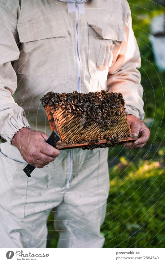 Beekeeper working in apiary Human being Nature Man Summer Animal Adults Natural Work and employment Farm Insect Draw Rustic Rural Pull Organic
