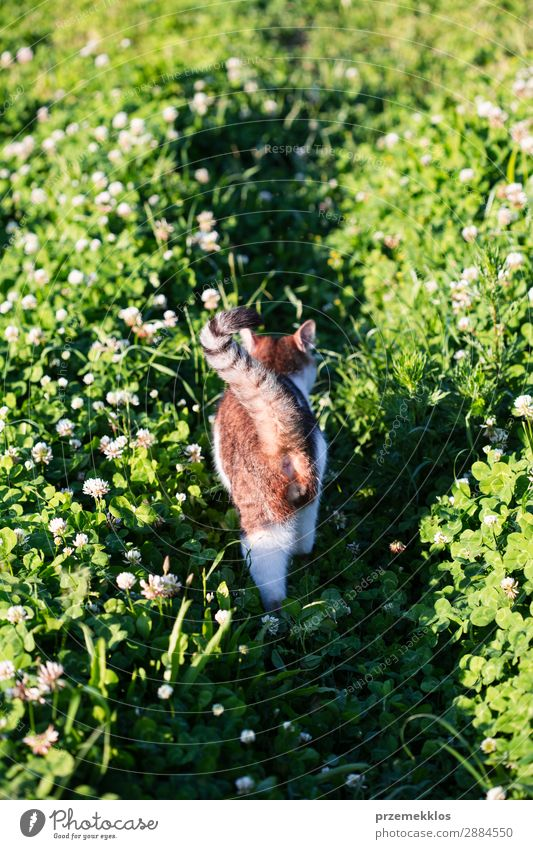 Rear view of cat walking through grass in the garden Beautiful Life Nature Animal Grass Pet Cat Funny Cute Gray Green Delightful Domestic furry Kitten