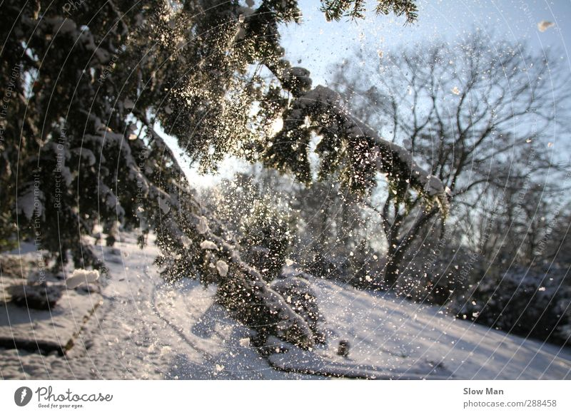 just snowy Winter Sunlight Weather Beautiful weather Ice Frost Snow Snowfall Moody Joy Idyll Fir tree Snowflake Pensive Smoothness Colour photo Exterior shot
