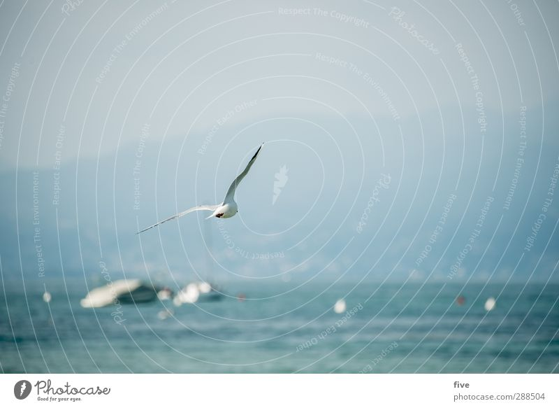 Sky Nature Vacation & Travel Water Summer Animal Mountain Lake Air Rock Bird Watercraft Flying Italy Lakeside Hill