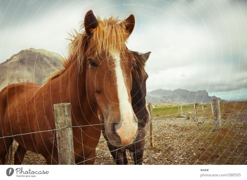 Sky Nature Animal Clouds Environment Brown Natural Pair of animals Beautiful weather Cute Horse Curiosity Friendliness Animal face Fence Pasture