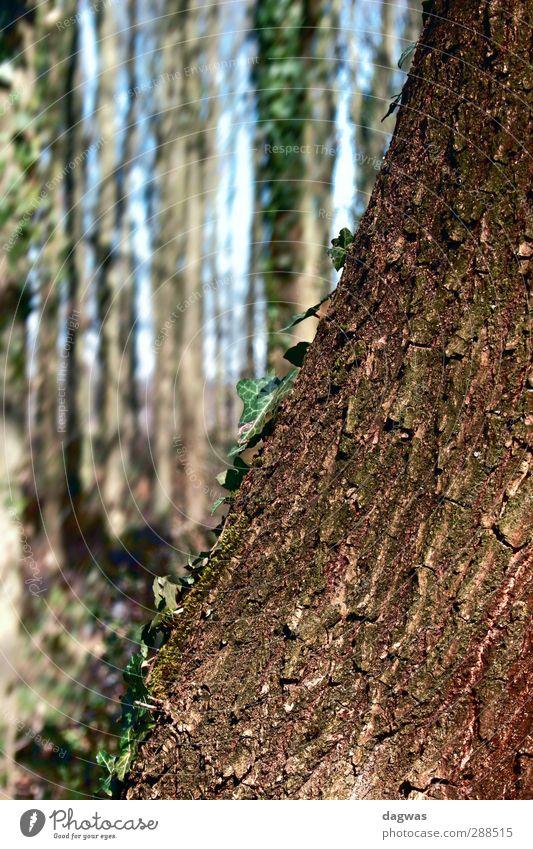 left ajar Environment Nature Landscape Plant Elements Spring Beautiful weather Tree Bushes Leaf Ivy Forest heath landscape Heathland Old Esthetic Natural Blue