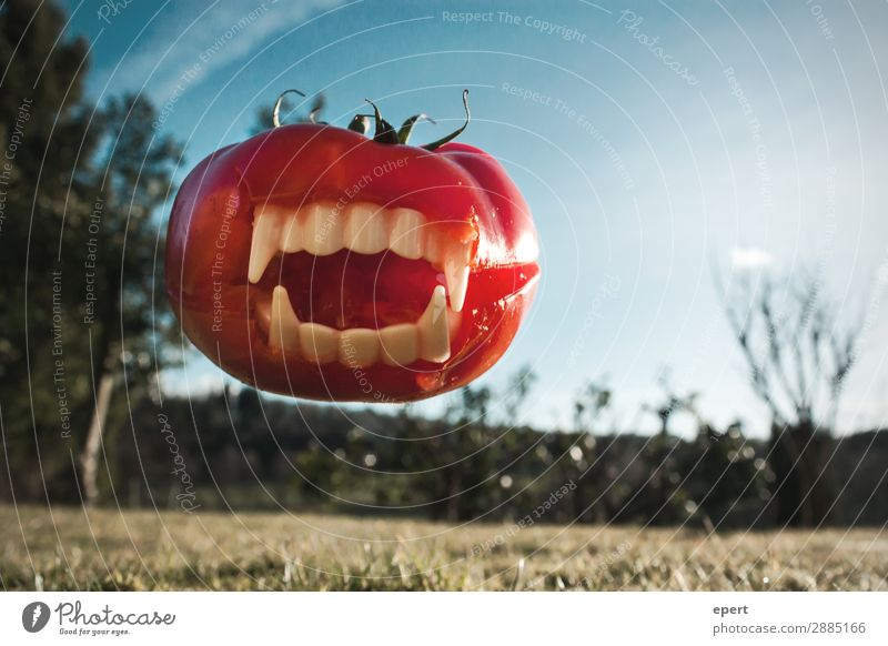 Attack of the meat tomato Vegetable Catch To feed Jump Aggression Threat Creepy Trashy Crazy Wild Dangerous Bizarre Whimsical Vampire Teeth Bite Tomato