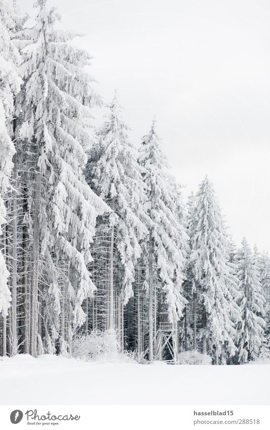 Thuringian Winter Forest Wellness Contentment Relaxation Calm Leisure and hobbies Far-off places Snow Environment Nature Climate change Snowfall Tree Field