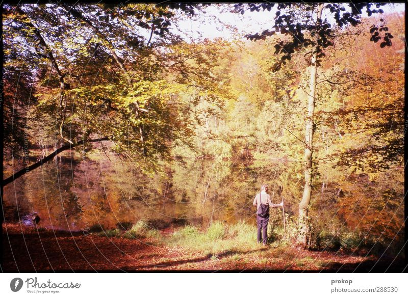 Autumn picture with hiker Human being Masculine Young man Youth (Young adults) Man Adults Life Environment Nature Landscape Plant Water Sky Sun Tree Leaf Forest